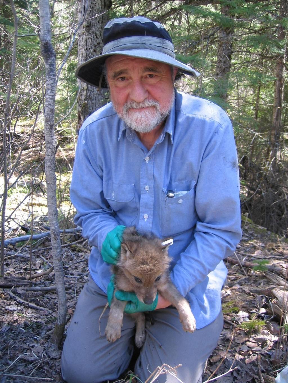 """""""Una carrera de 55 años en la investigación del lobo """" que el profesor David Mech en Bilbao Dave-pup"""